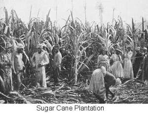 The practice of using slaves as inexpensive labor, as well as mass production of sugarcane on plantations allowed the high costs associated with sugar to decrease.
