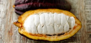 Split open cacao pod. [retrieved from http://annmariekostyk.com/wp-content/uploads/2010/03/SplitCocoPod3I_.jpg]