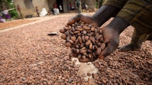 Poverty-in-cocoa-ignored-in-sustainablity-drive-Cocoa-Barometer-2015_strict_xxl