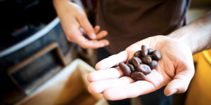Theo Chocolate - The First Organic, Fair Trade Bean-to-Bar Chocolate Company in the United States.