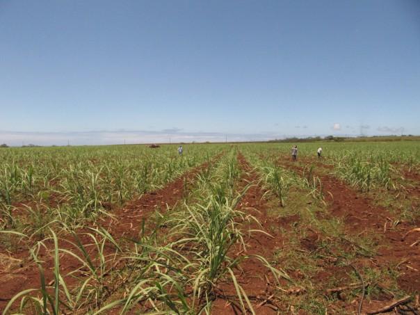 AP Explains Hawaiis Last Sugar Plantation