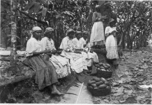 Girls-On-Cocoa-Plantation-Trinidad-British-West-Indies