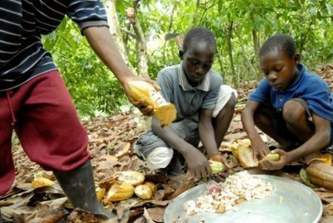 International-Cocoa-Initiative-partners-with-ILO-to-tackle-child-labour-on-cocoa-farms_medium_vga