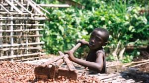 http://www.foodispower.org/wp-content/uploads/chocolate_slavery_main.jpg