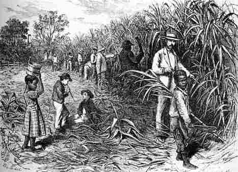 Slaves working in a sugar cane plantation in British-West Indies