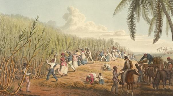 SUAGARCANECUTTER1830