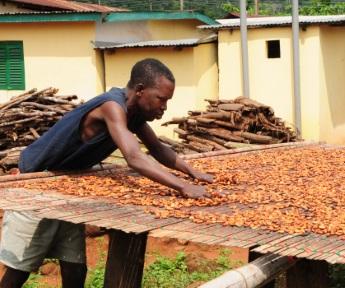 Cocoa farmer in Ghana 345x288