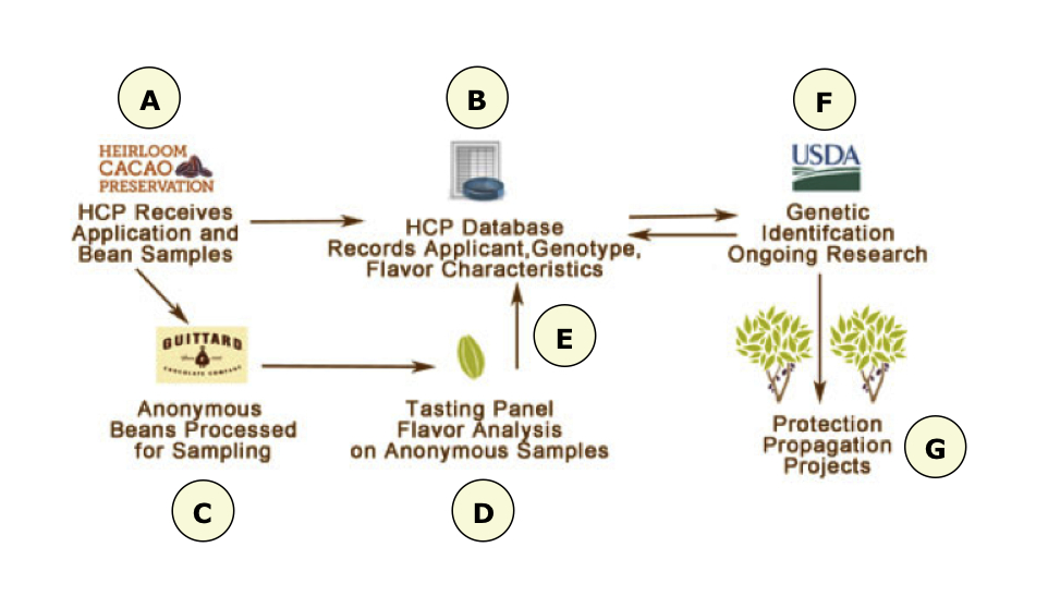 hcp-process-detail