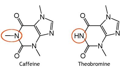 Caffeine vs. Theobromine