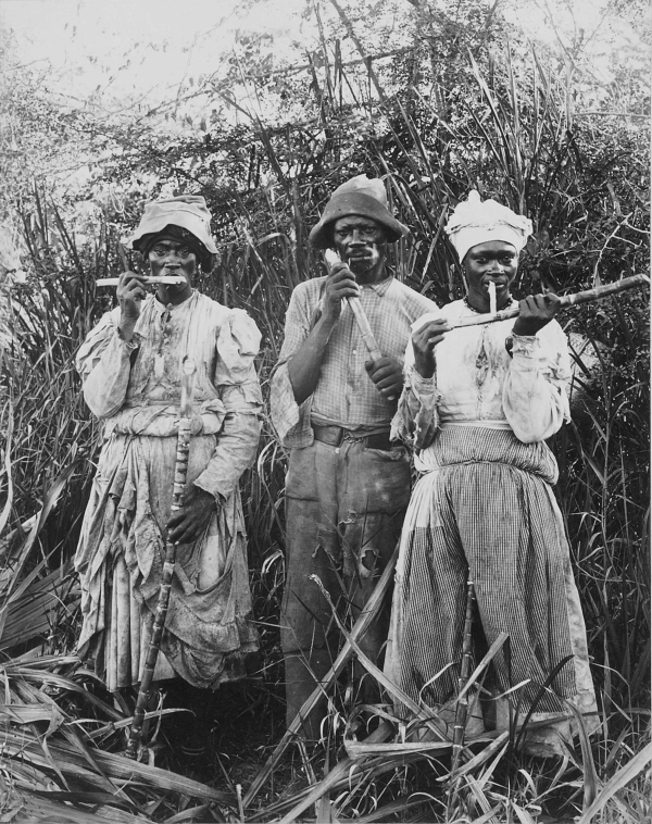 cane_cutters_in_jamaica