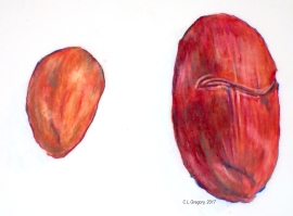 small and large cacao bean