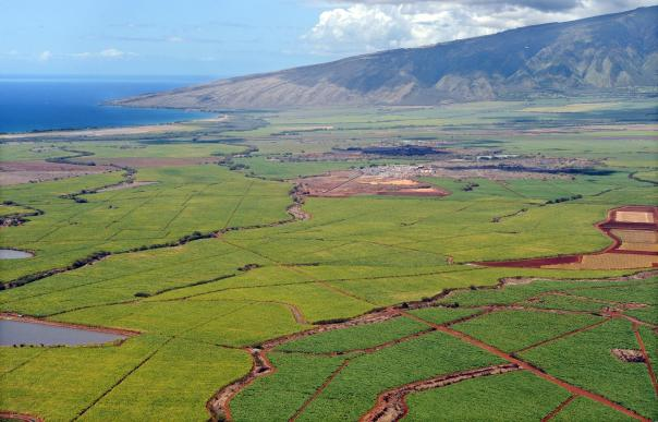 sugar_plantation_matt_thayer__maui