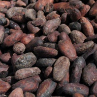 cacao beans (based on Wikimedia Commons, by Supermanu, CC BY-SA 2.5)