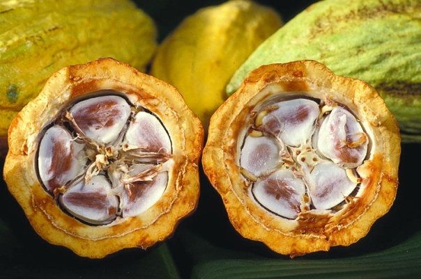 sliced cacao pods