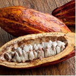 Chocolate-Cocoa-'Cacao'-Plant-2-450w