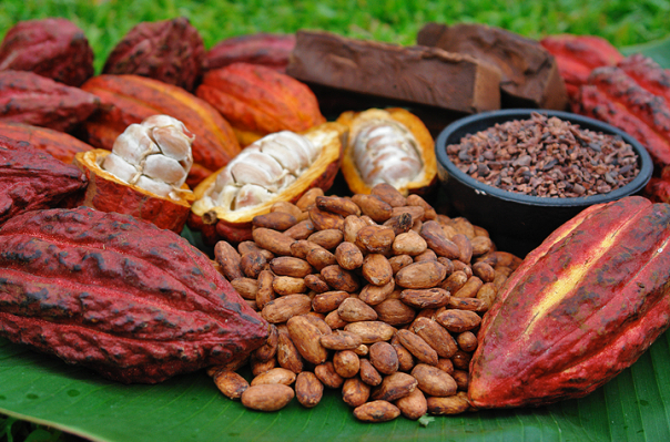 cocoa-beans-and-pods