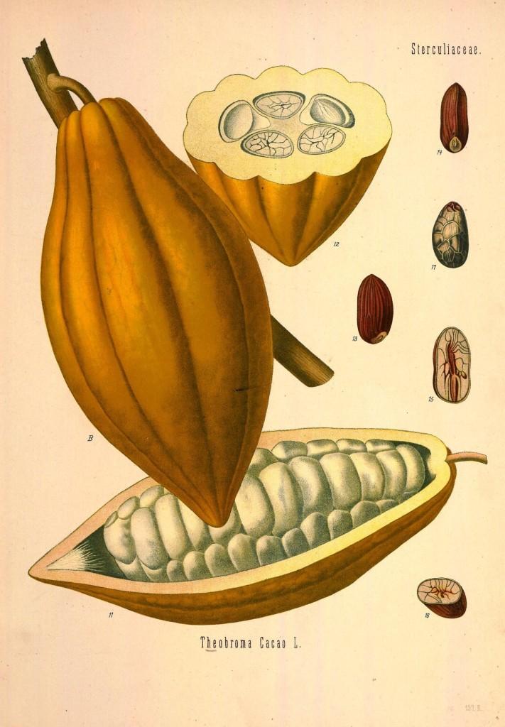 Köhler's_Medizinal-Pflanzen_in_naturgetreuen_Abbildungen_mit_kurz_erläuterndem_Texte_(Plate_157_II)_(8232806778)